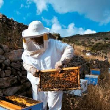 Ετήσιος μελισσοκομικός κύκλος
