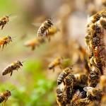 Τα μυστικά των μελισσών