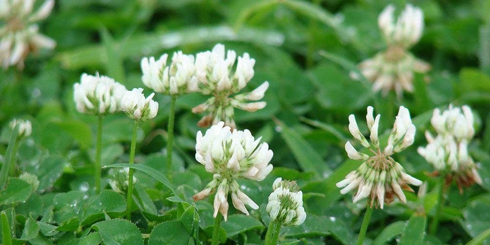 Μελισσοκομικά Φυτά