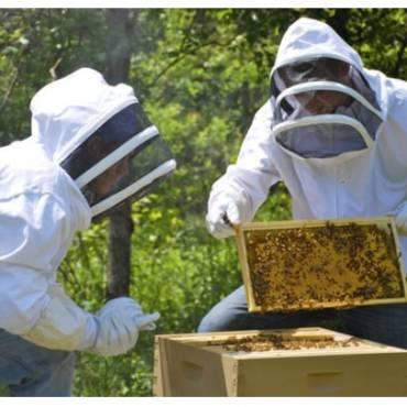 Μελισσοκομική Τέχνη