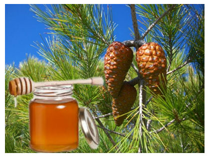 Μέλι Πεύκου