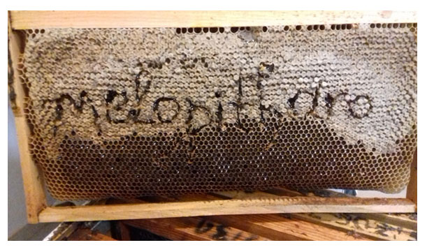 Πως παράγεται το μέλι
