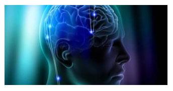 Στο τέλος της μελέτης συμπεριφοράς, τα πειραματόζωο θανατώθηκαν και εξετάστηκαν οι εγκέφαλοί τους